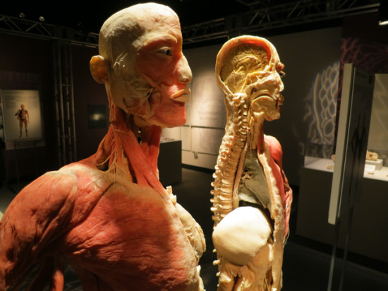 Bodies - Internal organs