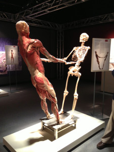 Sliced and Diced and So Educational: Bodies The Exhibition – Buena Park
