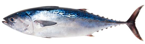 safe catch tuna tuna-transparent-bg1