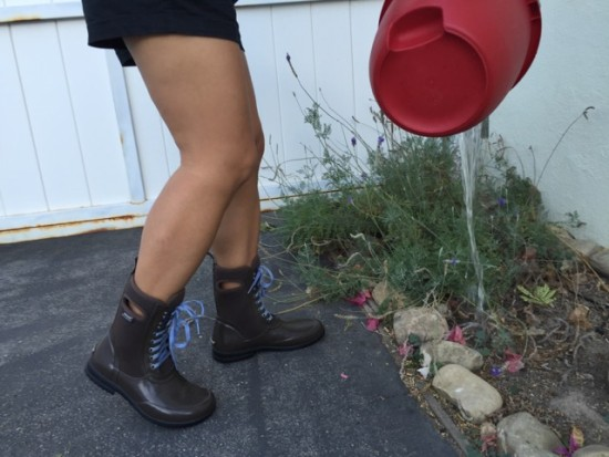 waterconservation_bogs