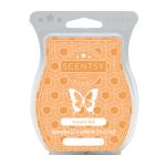 pumpkinspice_scentsy_melissadell